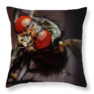 Scavenger Close-up Throw Pillow