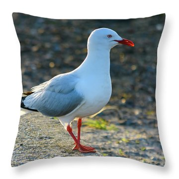 Seagull On The Breakwall Throw Pillow