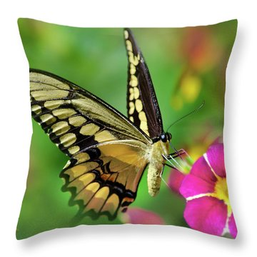 Throw Pillow featuring the photograph Second Nature Butterfly by Christina Rollo