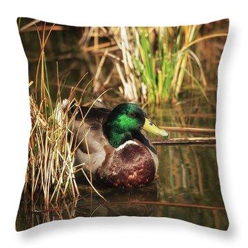Throw Pillow featuring the photograph Serene by Rick Furmanek
