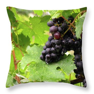 Shalestone - 14 Throw Pillow