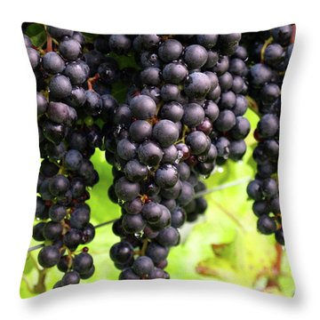 Shalestone - 8 Throw Pillow