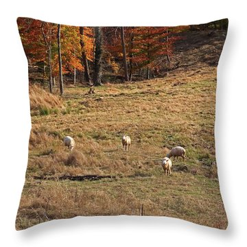 Throw Pillow featuring the photograph Sheep In A Field by Angela Murdock