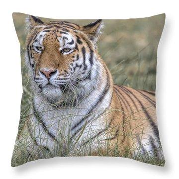 Shere Khan Throw Pillow