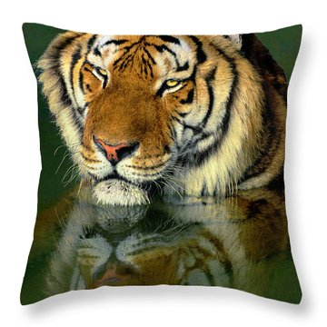 Throw Pillow featuring the photograph Siberian Tiger Reflection Wildlife Rescue by Dave Welling