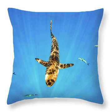 Silky Shark Throw Pillow