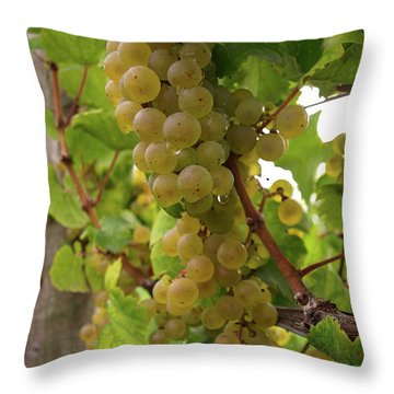 Silver Thread - 3 Throw Pillow