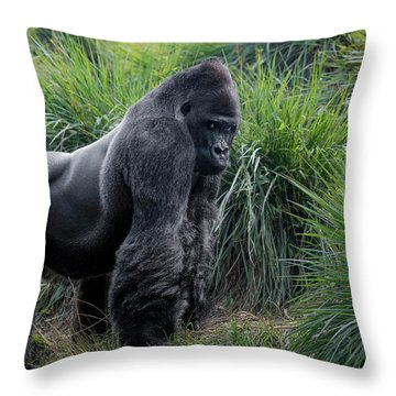 Silverback Stare 1806 Throw Pillow