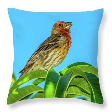Singing House Finch Throw Pillow