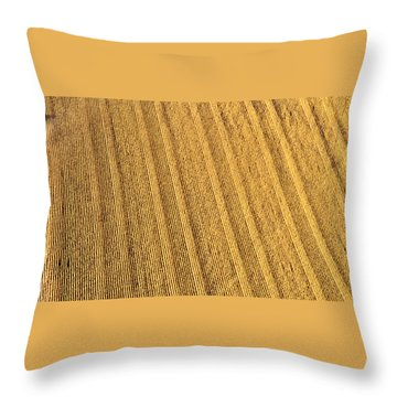 Throw Pillow featuring the photograph Sixty Million Kernels by Carl Young
