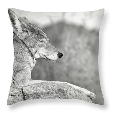 Sleepy Coyote Throw Pillow