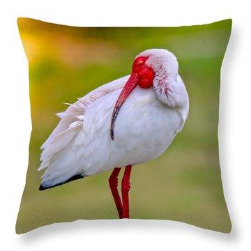 Sleepy Ibis Throw Pillow
