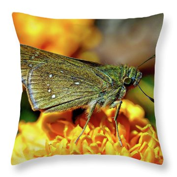 Throw Pillow featuring the photograph Small Branded Swift by Anthony Dezenzio