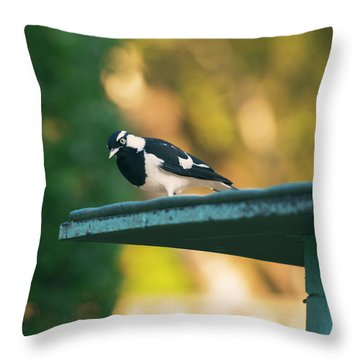 Small Magpie Lark Outside In The Afternoon Throw Pillow
