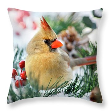 Throw Pillow featuring the photograph Snow Cardinal by Christina Rollo