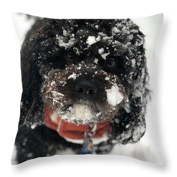 Snow Dog 11 Throw Pillow