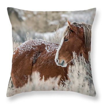 Snow Dusted Mustang Stallion Throw Pillow