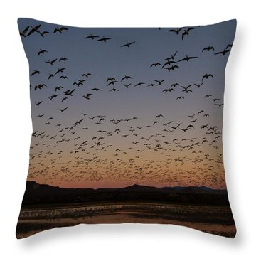 Throw Pillow featuring the photograph Snow Gees Blastoff by Nicole Young