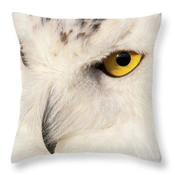 Snow Owl Eye Throw Pillow