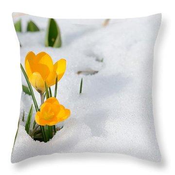 Crocus Throw Pillows