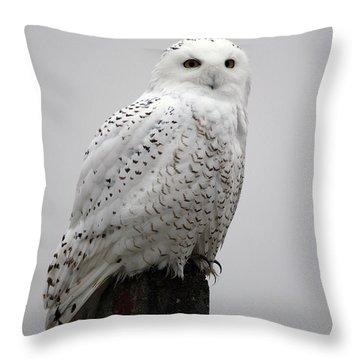 Snowy Owl In Fog Throw Pillow
