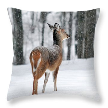 Snowy White Tail Throw Pillow