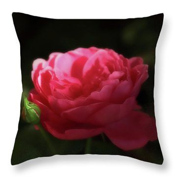 Throw Pillow featuring the photograph Soft Red Rose In The Evening Light by Johanna Hurmerinta