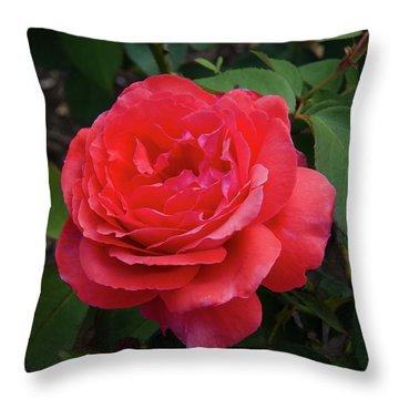 Solitary Rose Throw Pillow