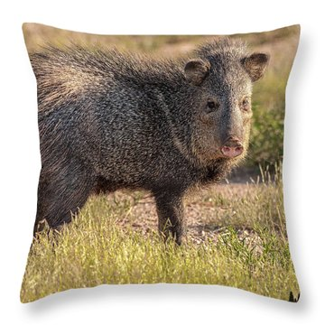 Solo Javelina Throw Pillow