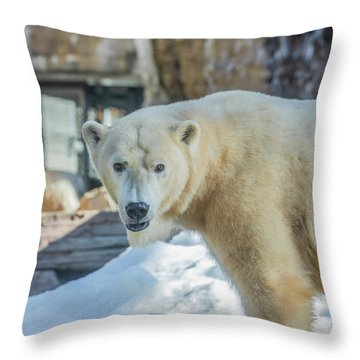 Someone's Hangry Throw Pillow