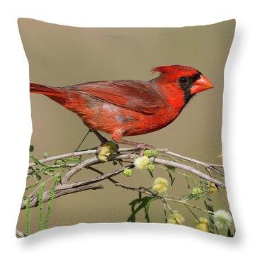 South Texas Cardinal Throw Pillow