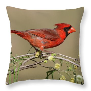 South Texas Cardinal Throw Pillow