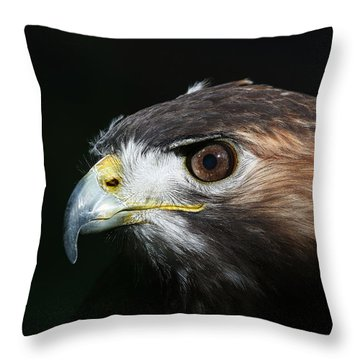 Throw Pillow featuring the photograph Sparkle In The Eye - Red-tailed Hawk by Debi Dalio