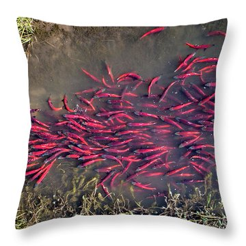 Spawning Kokanee Salmon Throw Pillow