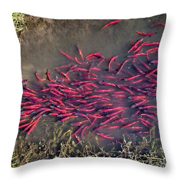 Spawning Kokanee Salmon Throw Pillow