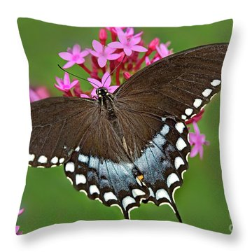 Spicebush Swallowtail Papilio Trollus Throw Pillow