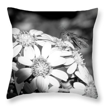 Spotlight To Pollinate Throw Pillow