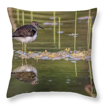Spotted Sandpiper Reflection Throw Pillow