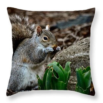 Squirrel And His Dinner Throw Pillow