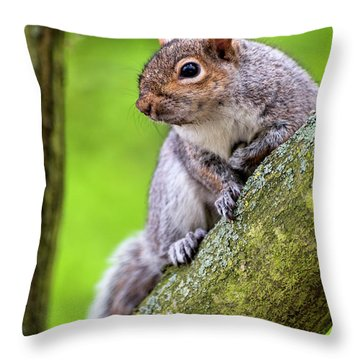 Squirrel At Greenwich Park Throw Pillow