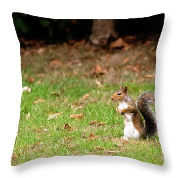Throw Pillow featuring the photograph Squirrel Stood Up In Grass by Scott Lyons
