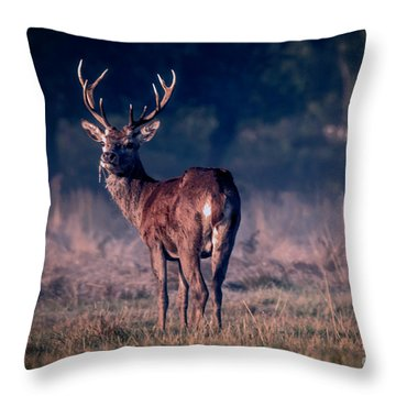 Stag Eating Throw Pillow