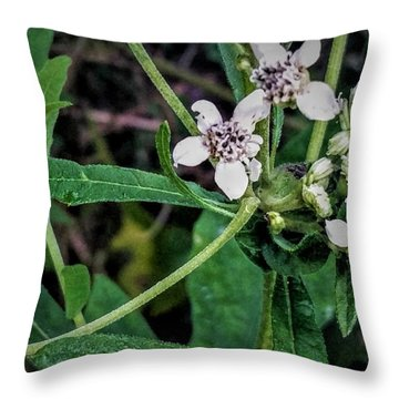 Throw Pillow featuring the photograph Stages Of Life by Vincent Autenrieb