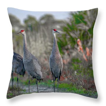 Throw Pillow featuring the photograph Standing Sandhills by Tom Claud