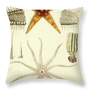 Starfish  Asterias Aurantiaca And Comatula Carinata Throw Pillow