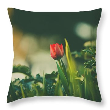 Throw Pillow featuring the photograph Start Of Spring by Dheeraj Mutha