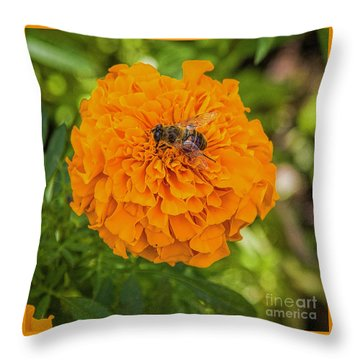 Throw Pillow featuring the photograph Stay Busy by Jon Burch Photography