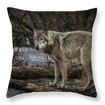Stay Dry Throw Pillow