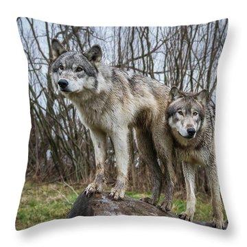 Still Lookin' Throw Pillow