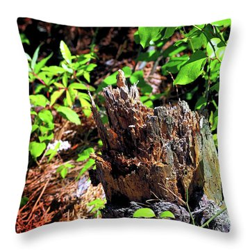 Throw Pillow featuring the photograph Stumped On Assateague Island by Bill Swartwout Fine Art Photography
